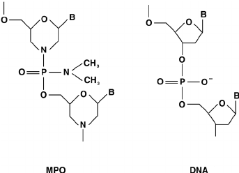 Chemical structure of MPO compared with DNA structure. B
