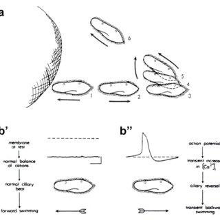 (PDF) Towards a process ontology of organism: Explaining