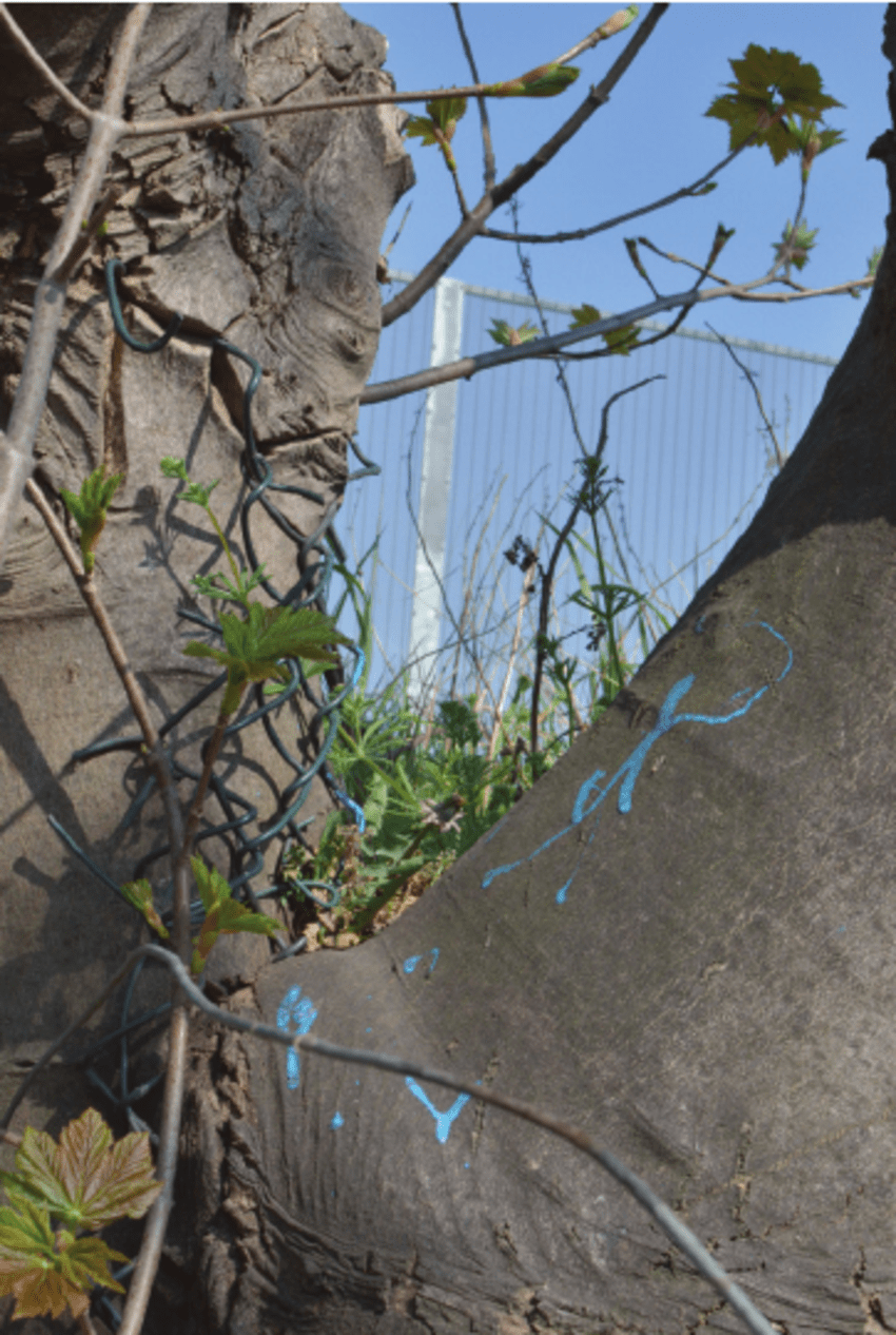 hight resolution of a palimpsest of fences a chain link fence is embedded in a tree spattered