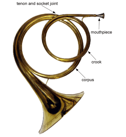 small resolution of main components of a natural horn