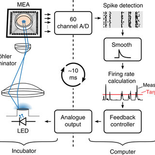 Overview of microelectrode array recordings for monitoring