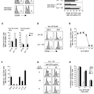 IL-12 therapy is only partially effective in mice