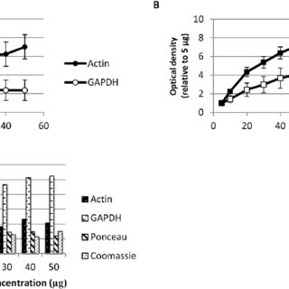 Detection of total protein in rat heart homogenates on