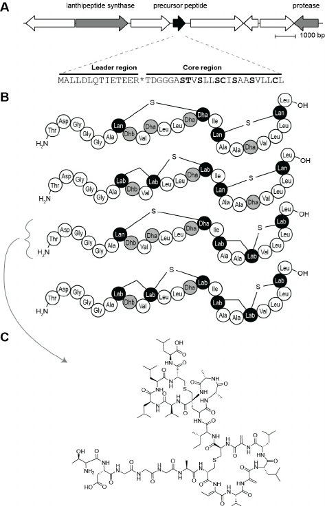 Using Genomics for Natural Product Structure Elucidation