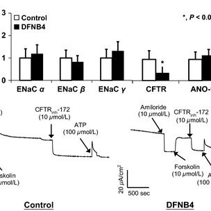 Expression of epithelial sodium channels (ENaC) and Cl