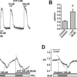 Effects of Cl and K channel blockers on NKCC activation by
