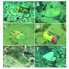 Scuba Gear Diagram Honda Gx390 Electric Start Wiring And Other Debris Deposited In Deep Sediments Of Isla Del Download Scientific