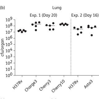 (PDF) A new in vivo model to test anti-tuberculosis drugs