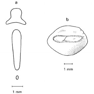 (PDF) A Review of the Genus Neobythites (Pisces