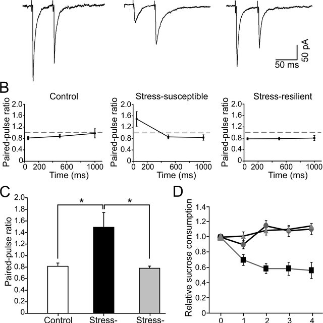 Frequency of spontaneous IPSCs in dentate gyrus granule