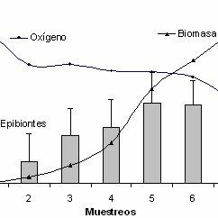 -Comportamiento de la biomasa, concentración de oxígeno