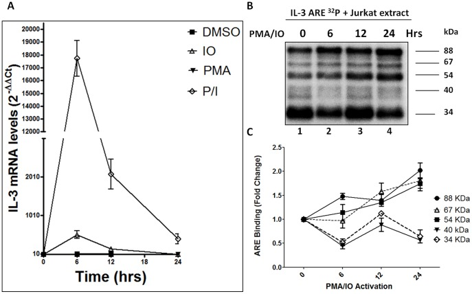 (A) IL-3 endogenous mRNA levels were measured after T cell