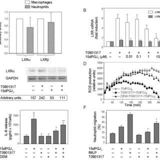 (PDF) Transcription of Liver X Receptor Is Down-Regulated