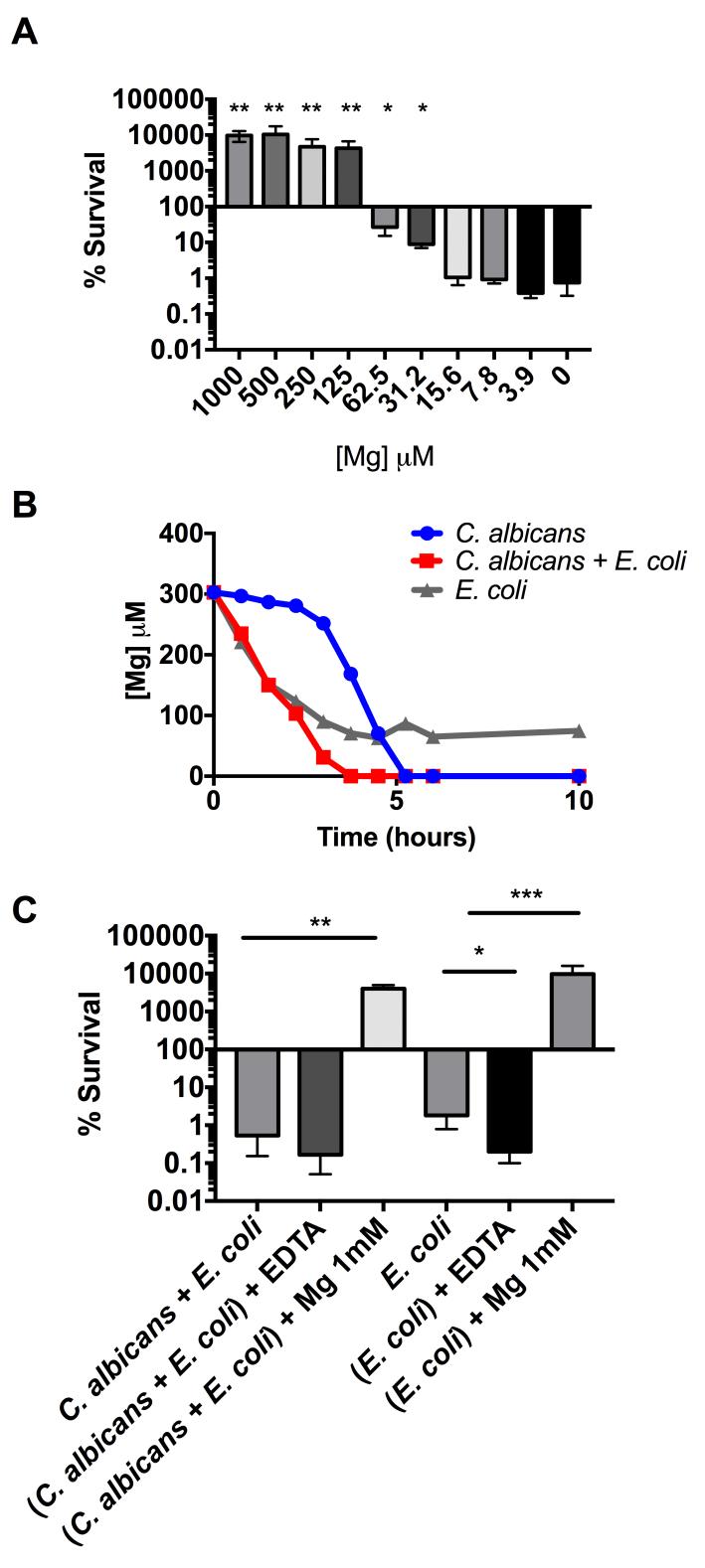 E. coli toxicity depends on magnesium limitation. (A