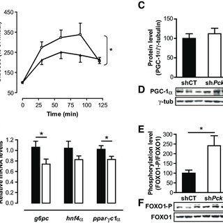 (PDF) Pck1 Gene Silencing in the Liver Improves Glycemia