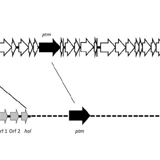 Expression of pyocin under stress conditions. The relative