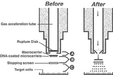 Components of the Biolistic ® PDS-1000/He particle