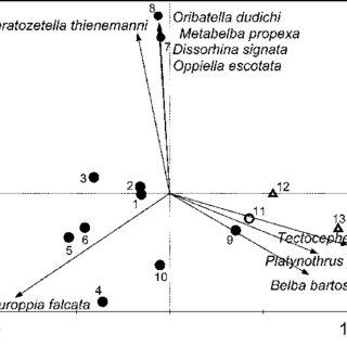(PDF) Soil microarthropods in non-intervention montane