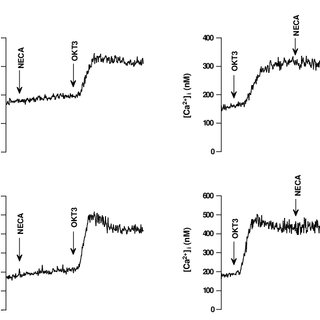 Immunodetection of A2BR in resting peripheral blood
