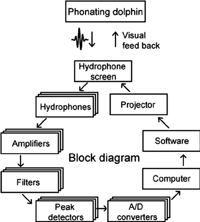 Block diagram displaying the signal path through the