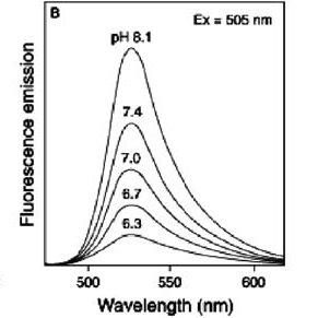 (PDF) Measurement of Intracellular pH