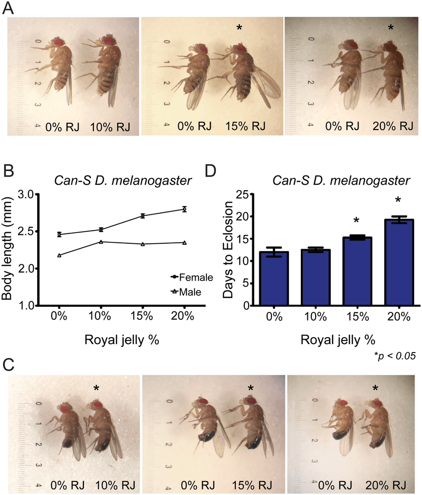 hight resolution of rj increases body size of can s d melanogaster and extends developmental time in