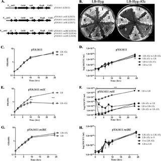 (PDF) Three Mycobacterium tuberculosis Rel Toxin-Antitoxin