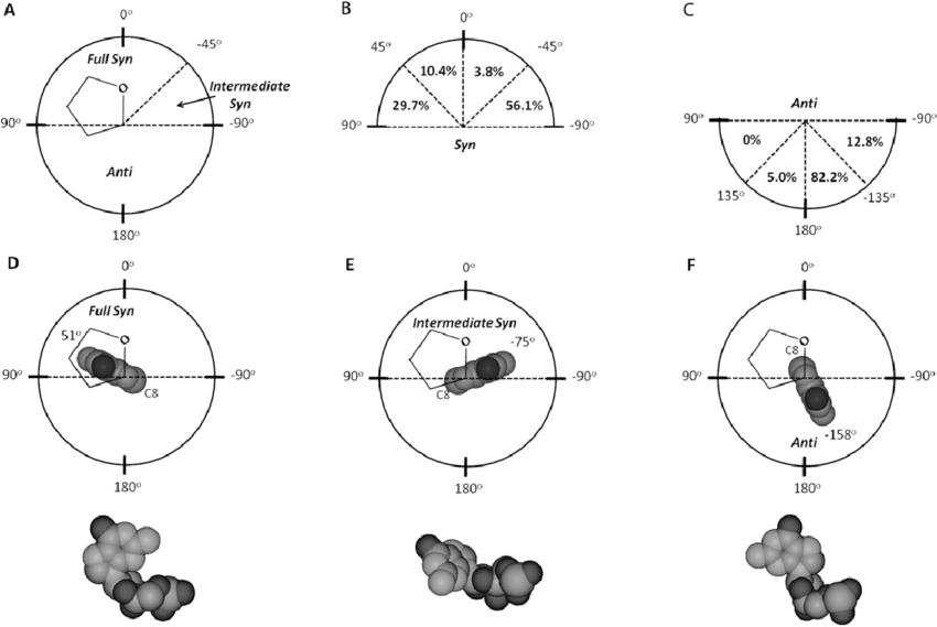 syn nucleobases in rna