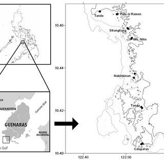 (PDF) Population Biology of Tripneustes gratilla (Linnaeus
