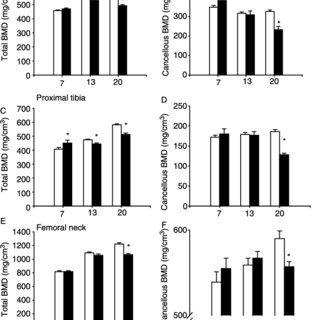 Lumbar spine properties of type 2 diabetic fatty and lean