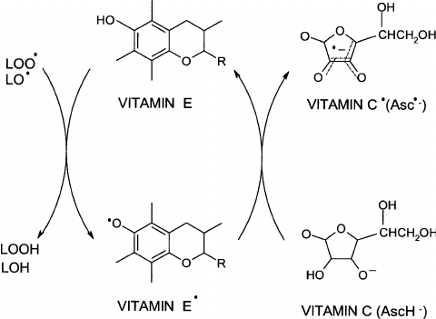 Reaction of vitamin E with peroxyl free radicals and