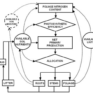 Schematic representation of key ecosystem processes and
