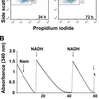 Effect of nicotinamide on cell viability and morphology. A