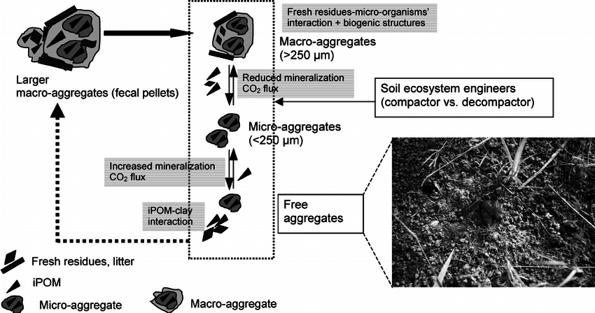 Model of aggregate formation dynamics and the role of