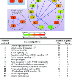 overlapping network of hepatic response to hyper and hypo osmotic challenges in gilthead sea [ 850 x 1152 Pixel ]