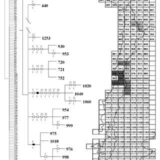 Cladograma de consenso de los 10.000 cladogramas