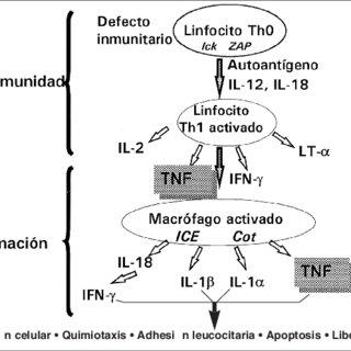 EL FACTOR DE NECROSIS TUMORAL (TNF-α α) REGULA PASOS