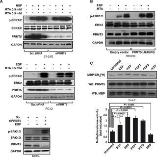 (PDF) Protein Arginine Methyltransferase 5 Regulates ERK1/2 Signal Transduction Amplitude and