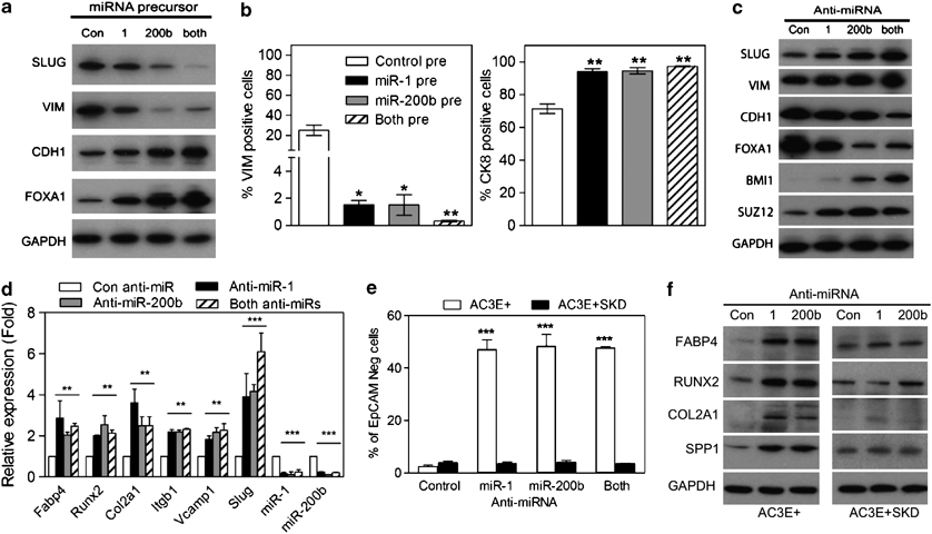 MiR-1 or miR-200b expression reduces EMT and expression of
