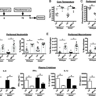 TLR ligands differentially alter the proinflammatory