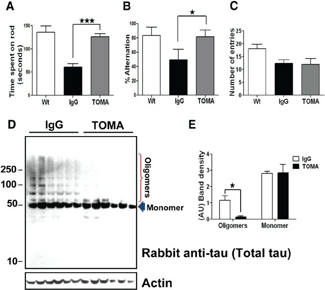 A single intravenous injection of TOMA reverses phenotypes
