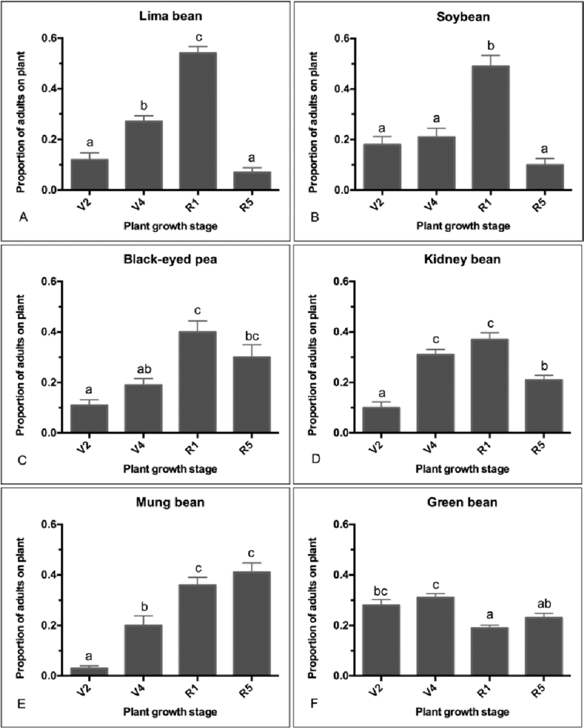 hight resolution of differential attractions of kudzu bug adults to different plant growth stages in greenhouse choice assay