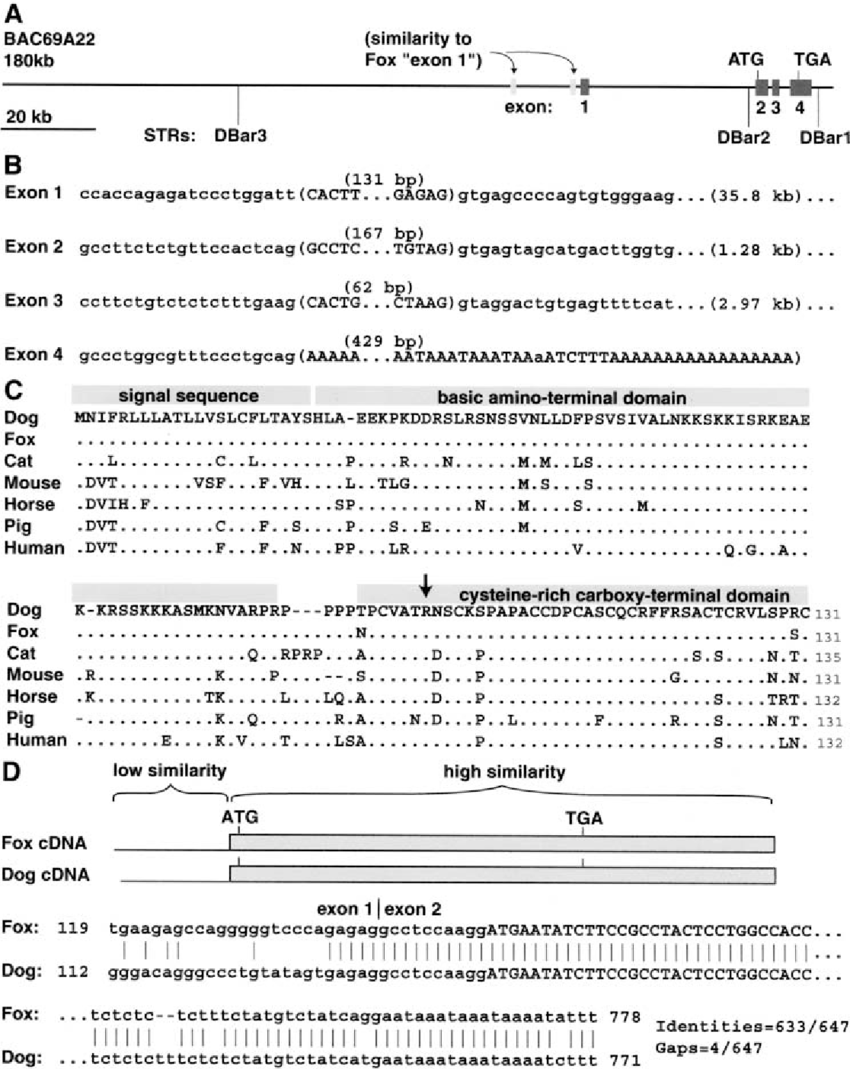 hight resolution of molecular characterization of the dog agouti gene a location and size of strs and agouti exons in bac69a22 exon sizes are indicated relative to each