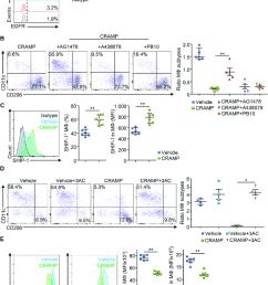 cramp regulates the pi3k pathway in pancreatic macrophages a download scientific diagram [ 850 x 1074 Pixel ]