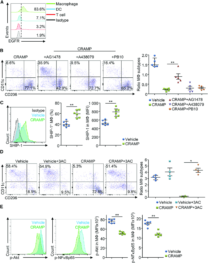 hight resolution of cramp regulates the pi3k pathway in pancreatic macrophages a download scientific diagram