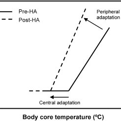 The time course of adaptations to exercise-heat