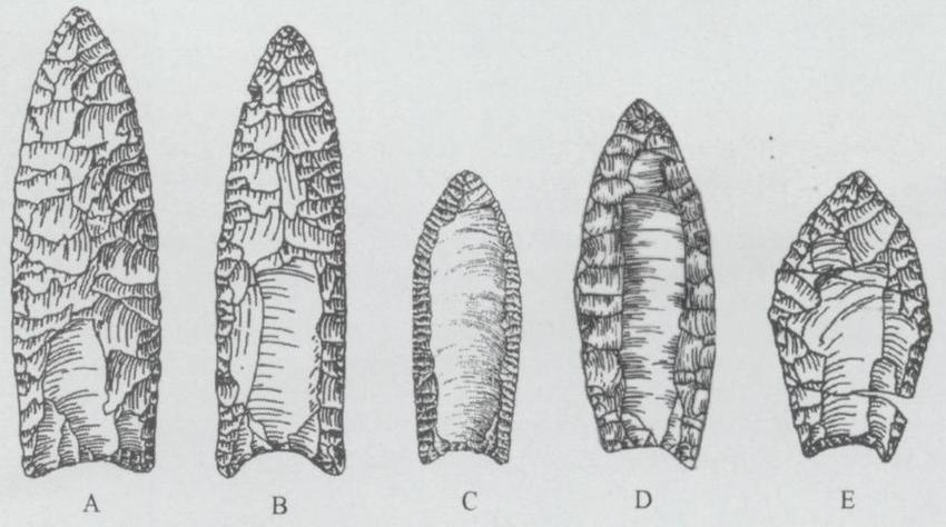 Fluted point types, A. Clovis, from the Lehner site in