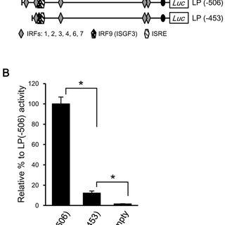 Transcriptional activity of the LGP2 promoter. ( A ) LP( 2