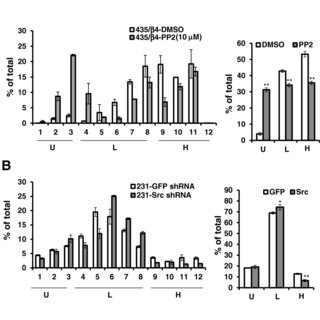 Src activity is required for eIF-4 F complex. MDA-MB-231