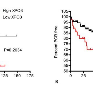 (PDF) Elevated XPO6 expression as a potential prognostic
